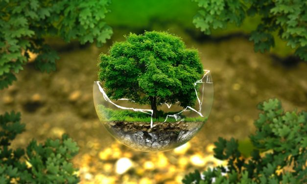 Quels sont les labels écologiques dans l'immobilier ?